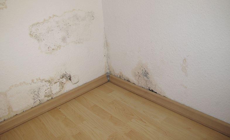 Ratgeber Hausbau Berlin - Baupfusch in allen Ecken